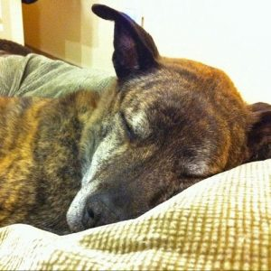 Treating arthritis in dogs