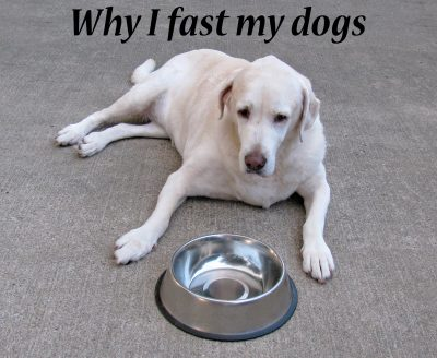 Why I fast my dogs